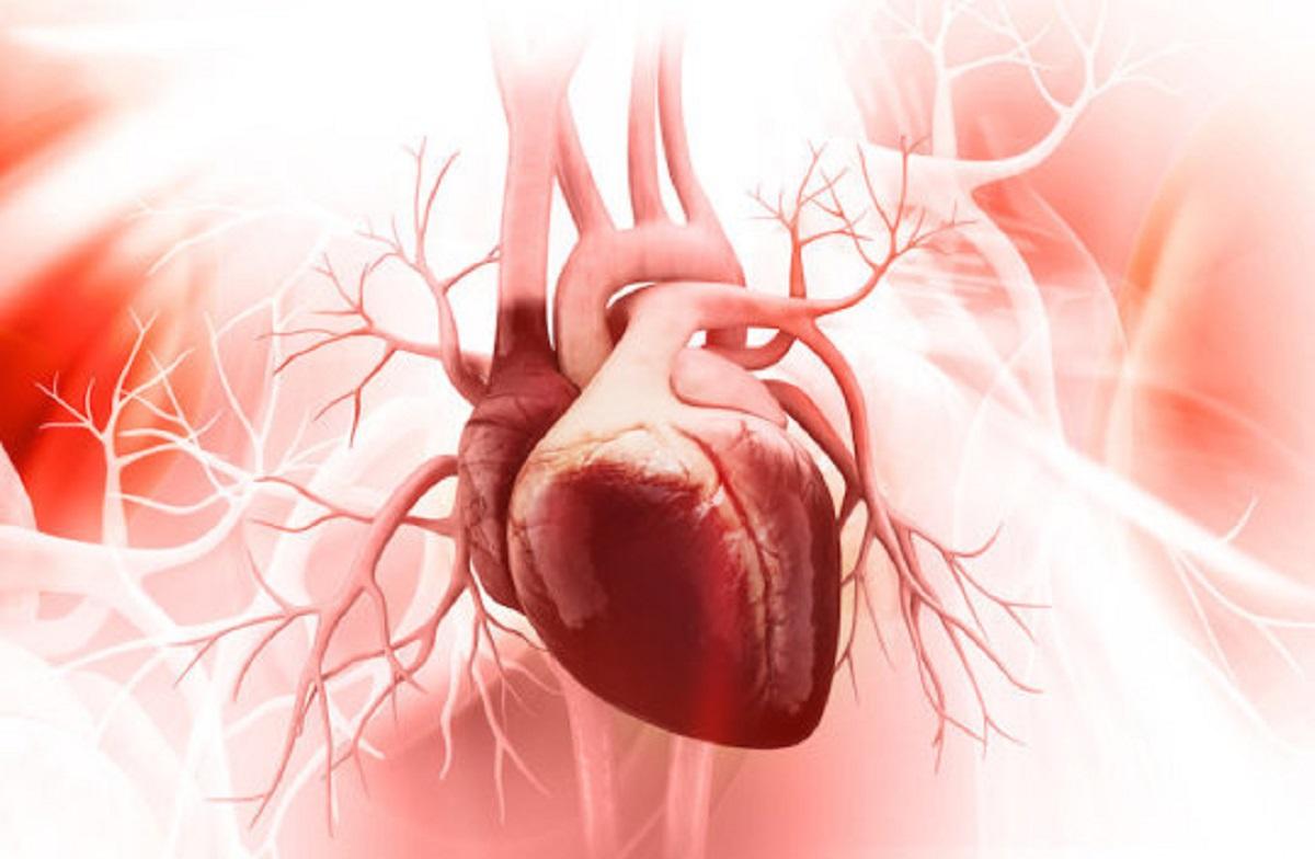 سلول-جدید-کشف-شده-ای-که-می-تواند-قلب-را-التیام-بخشد