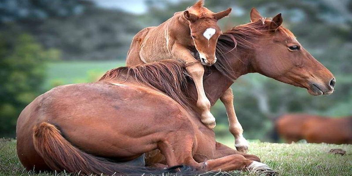 برخی-از-حقوق-و-مسئولیت-های-انسان-در-قبال-حیوانات