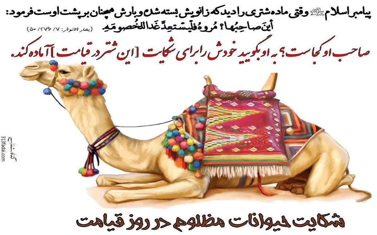 هفت-حق-مهم-حیوانات-در-روایات