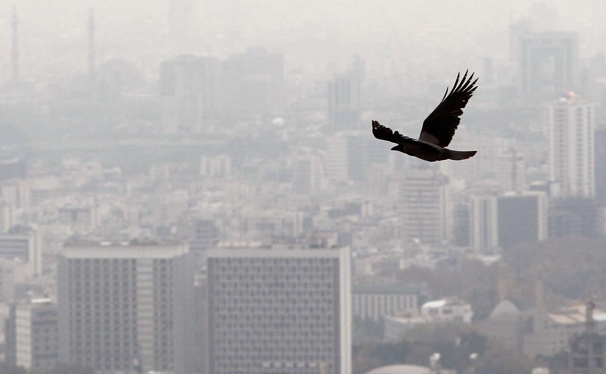 آلودگی-هوا-چه-تاثیری-بر-مادر-و-جنین-دارد