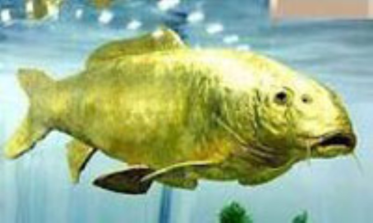 کشف ماهی شگفت انگیز از جنس طلا+عکس