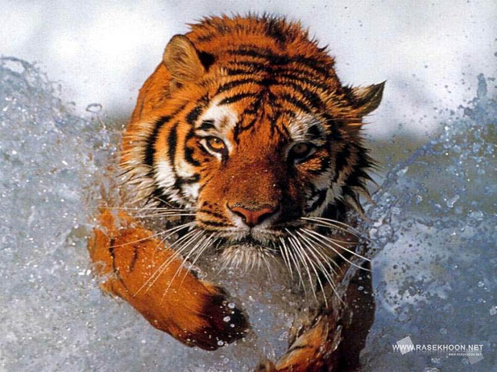 عکسهای حیوانات اهلی و وحشی