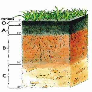 روش نمونه برداری و تعیین مقدار نیاز غذایی و کوددهی در گیاهان