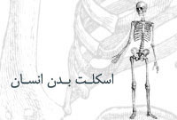 اسکلت بدن انسان
