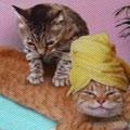 Massage Vibra v1.2