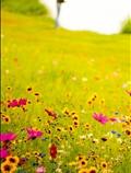 مزرعه گل