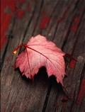 برگ قرمز