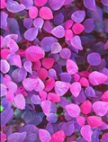 برگهای رنگی