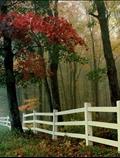 پرچین، مه، پاییز، جنگل