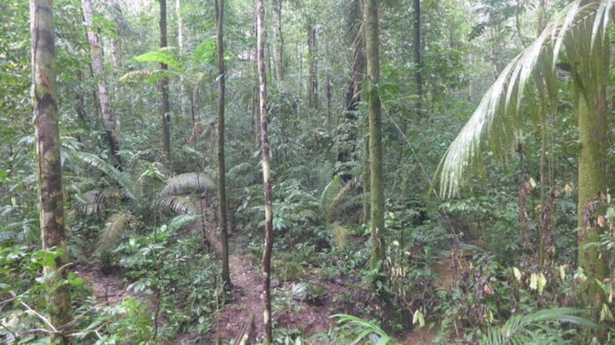 حقایقی درباره ی جنگل های بارانی