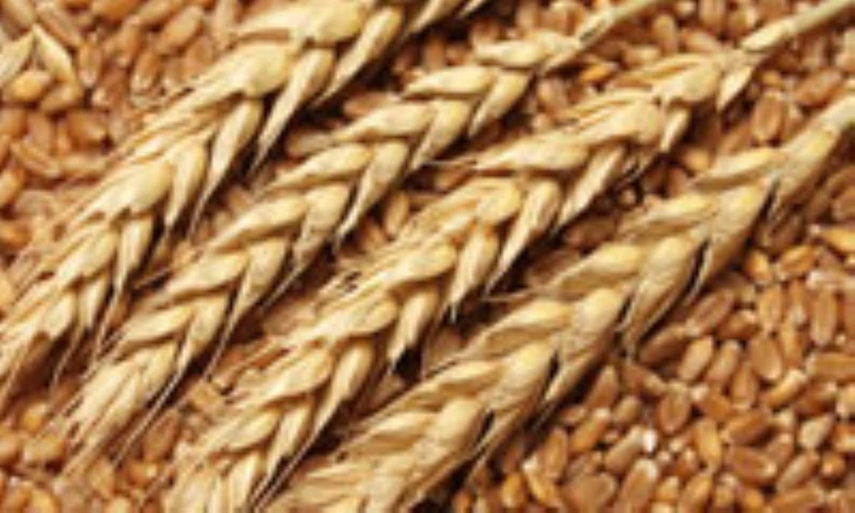 بررسی-مزیت-مقیاس-مزیت-کارآیی-و-مزیت-جمعی-محصولات-زراعی-دیم-(2)