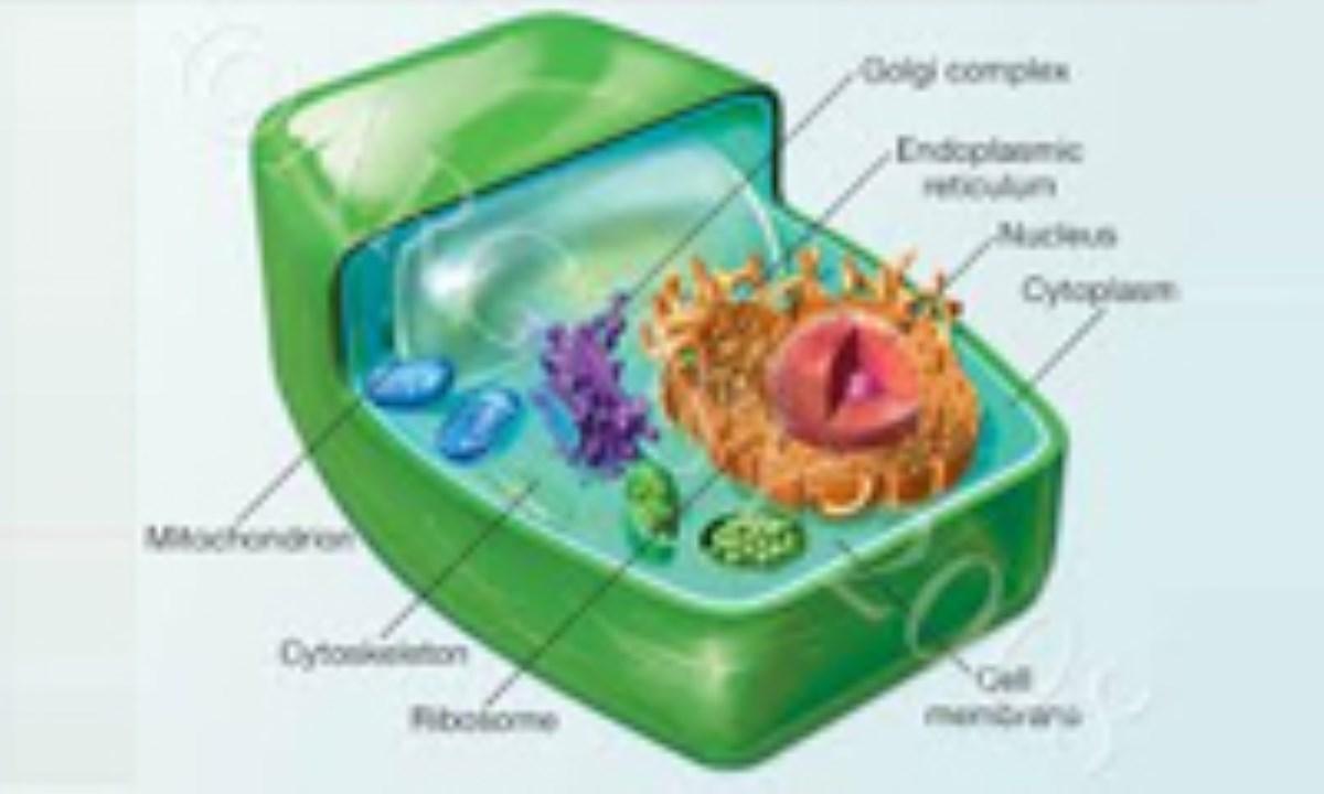 اجزای یک سلول