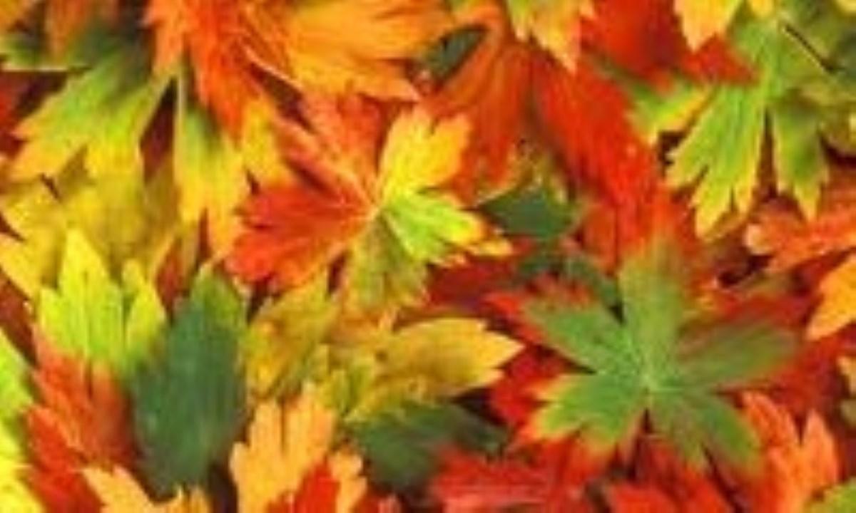 چرا برگها تغییر رنگ میدهند