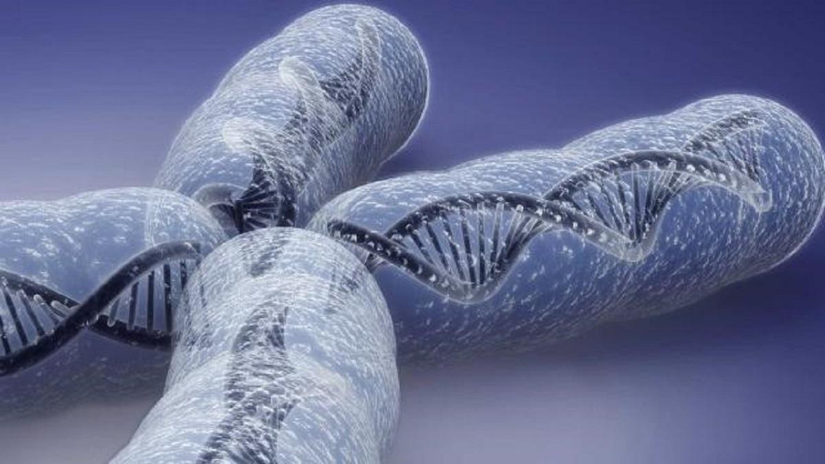 نابهنجاریهای کروموزومی