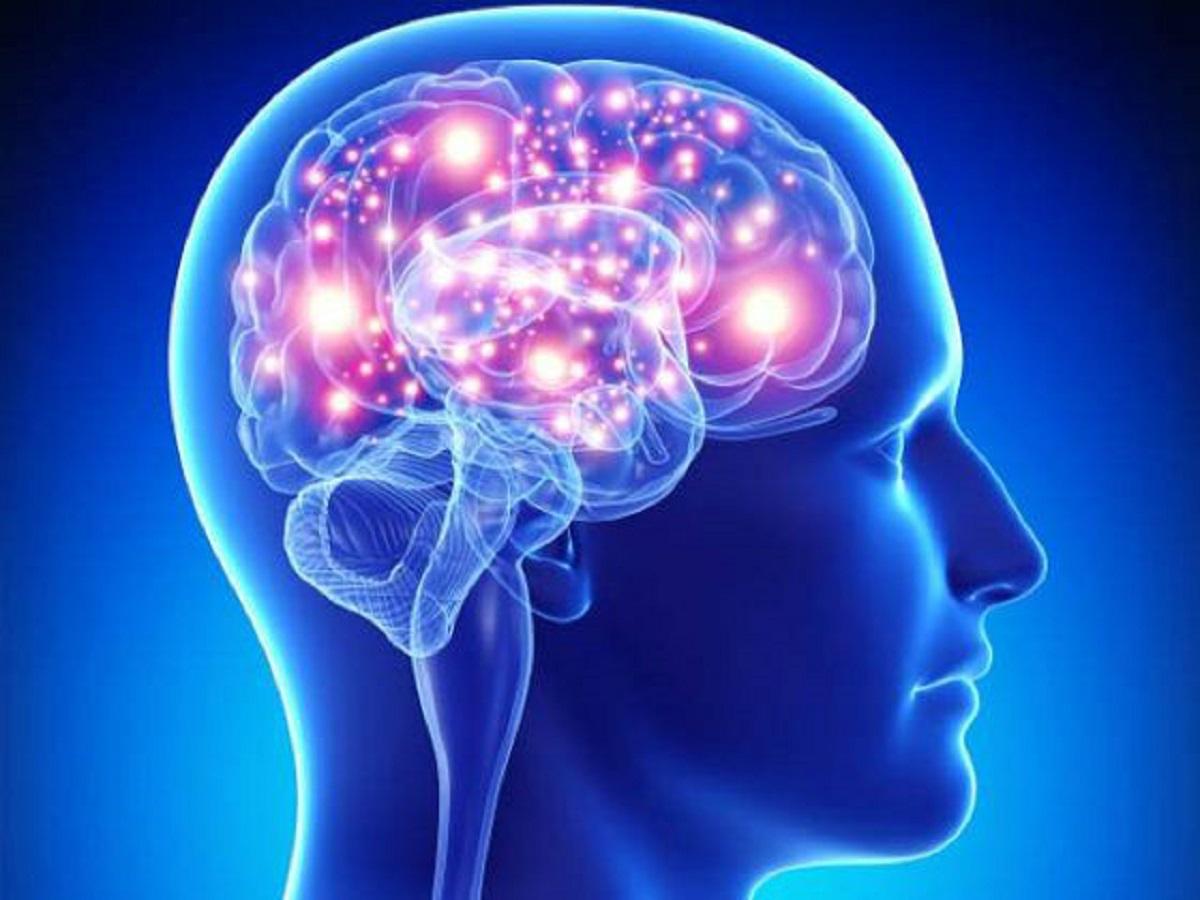جنبههای رشدی فیزیولوژی اعصاب زبان