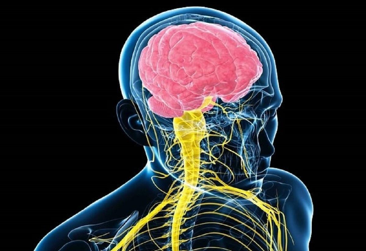 دریافت اطلاعات دستگاه اعصاب مرکزی