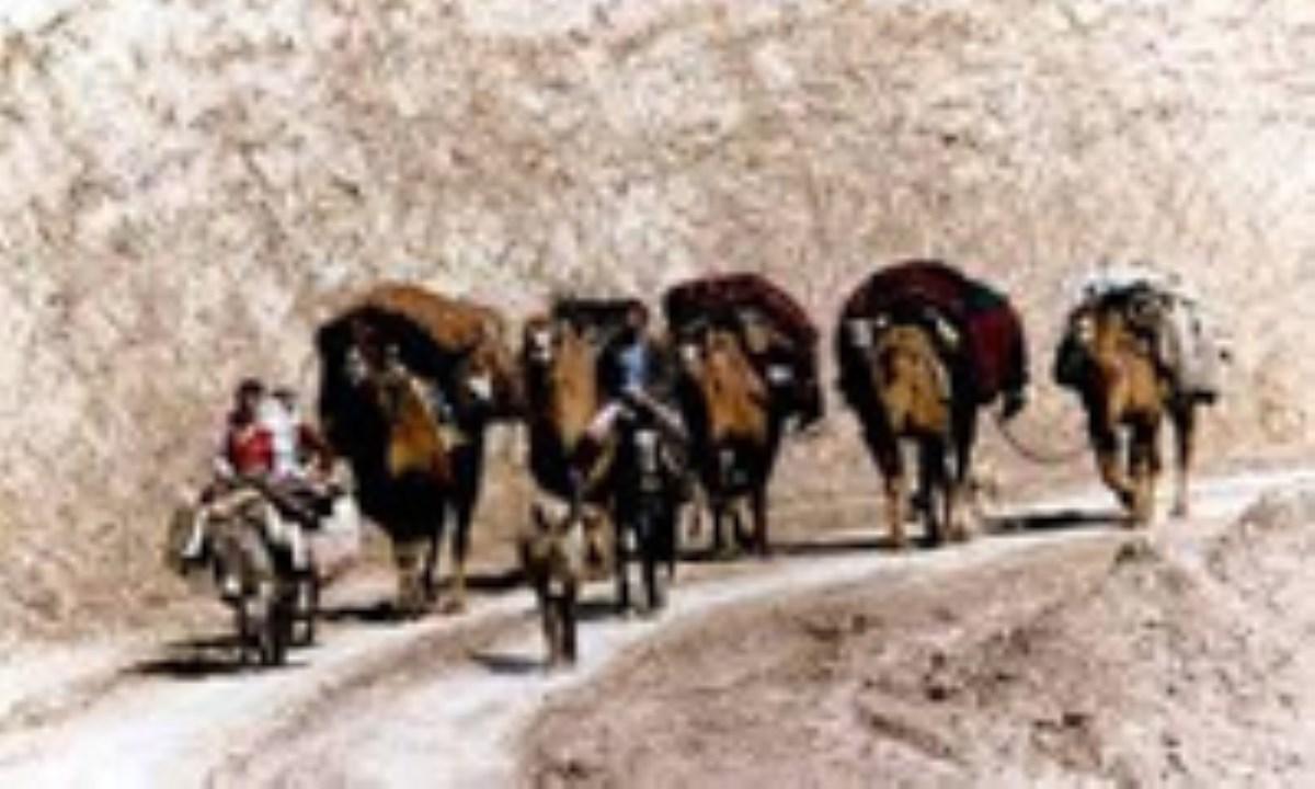 باجَلان، از عشایر کرد ایران و عراق