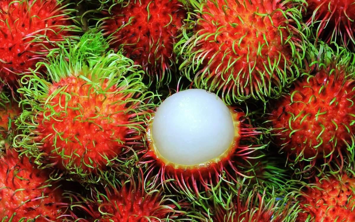 آشنایی با میوه مژکی یا رامبوتان و فواید آن