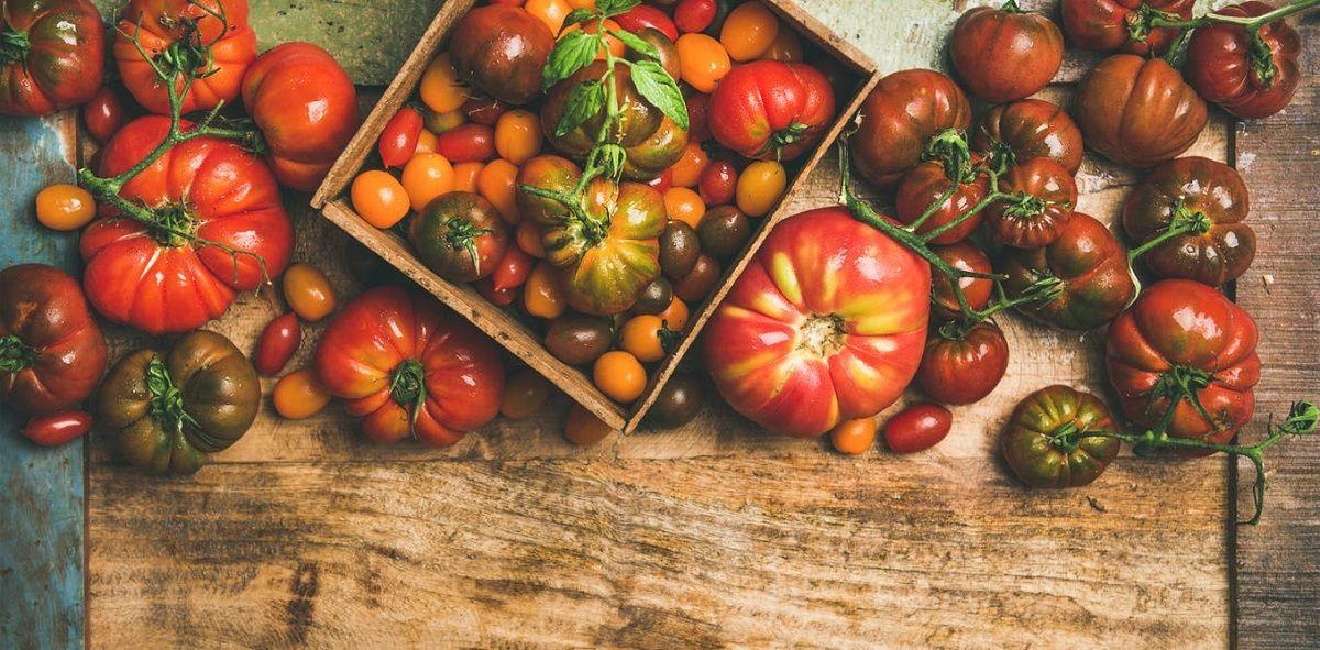 تکامل گوجه فرنگی