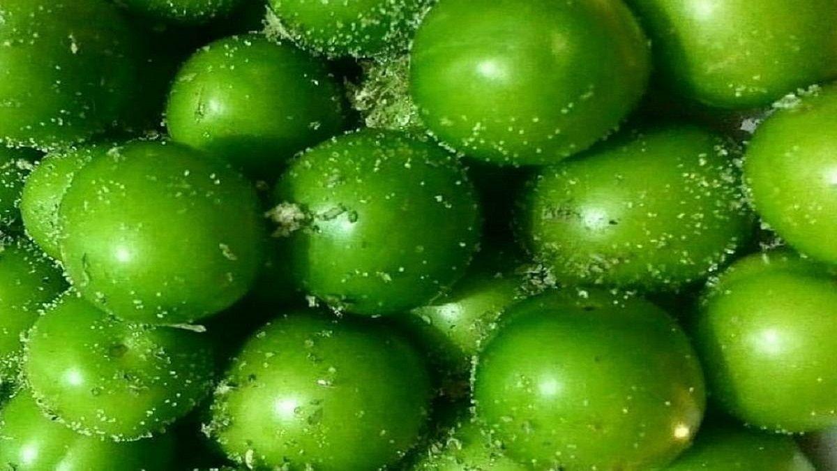 خواص میوه پر طرفدار گوجه سبز