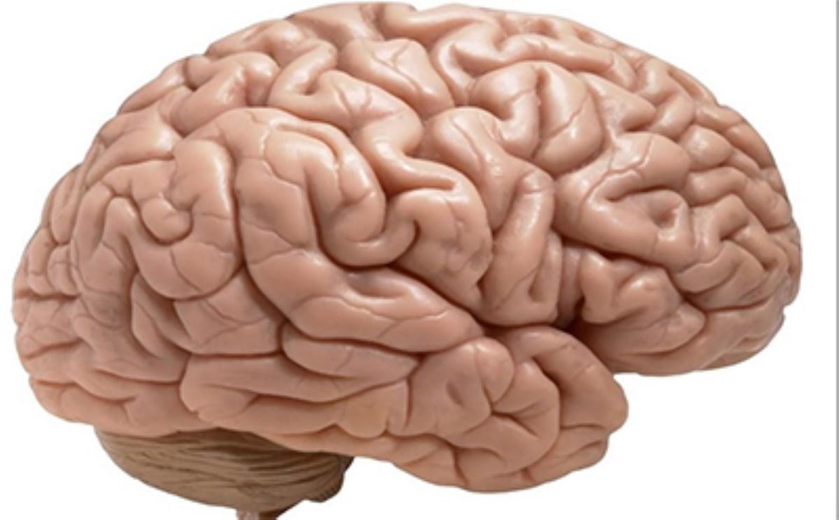 با دستکاری یک تکژن میتوان مغز پیرشده را جوان کرد