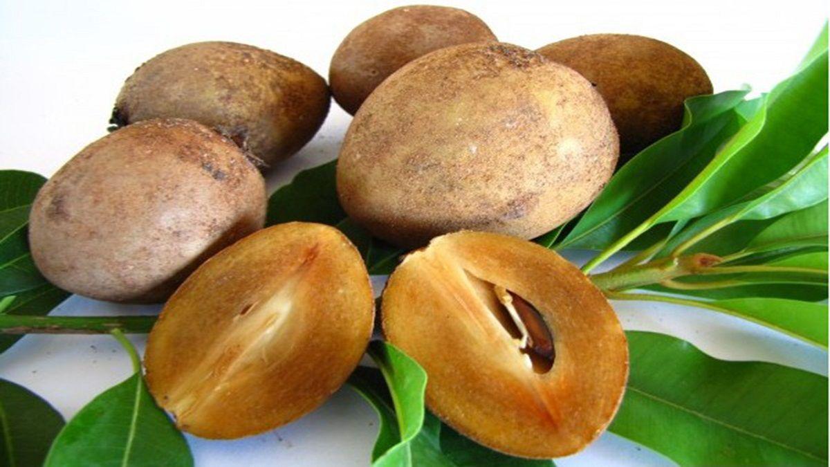 آشنایی با میوه چیکو و خواص آن برای سلامتی