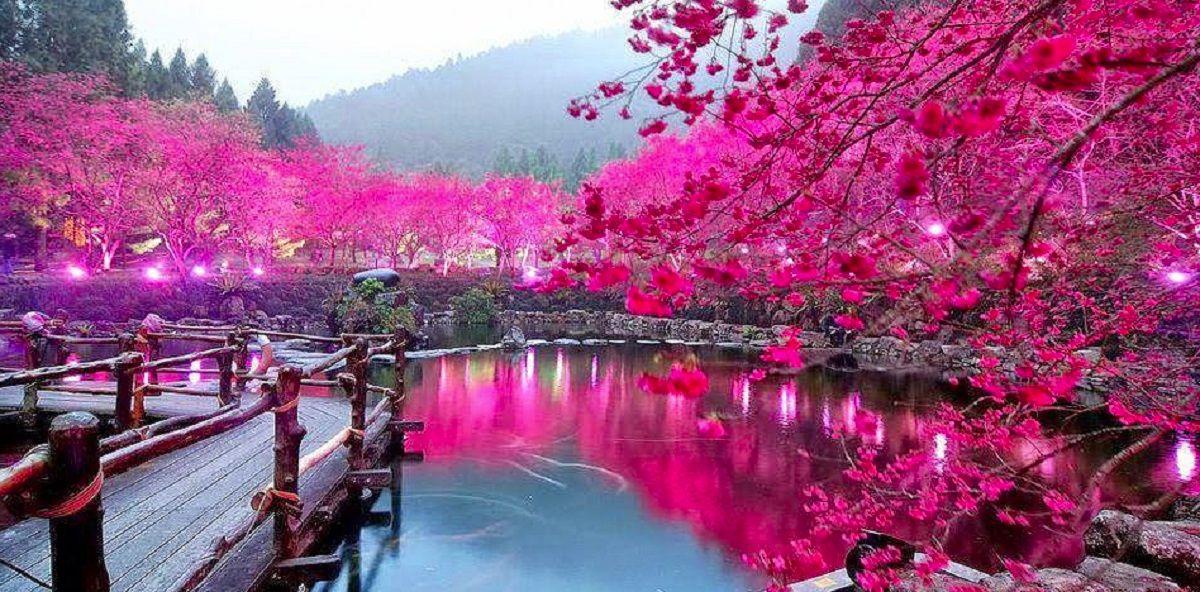 بهشت؛ ادامه زندگی طبیعی