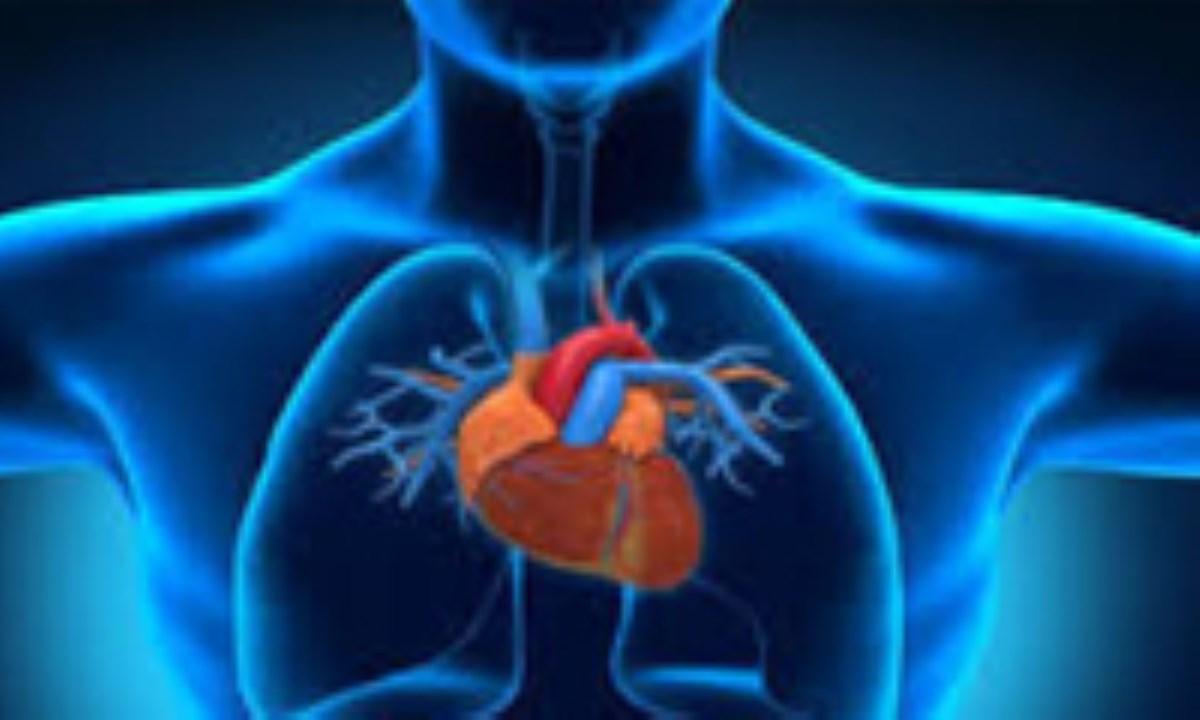 وظایف دیافراگم به عنوان اندام تنفسی بسیار مهم