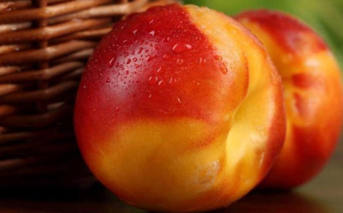 خواص میوه شفت آلو
