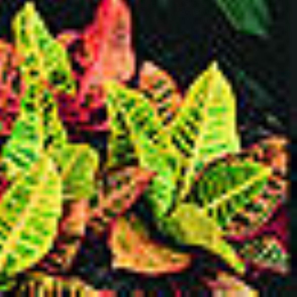 صدها گونه از گیاهان دارویی در معرض خطر انقراض