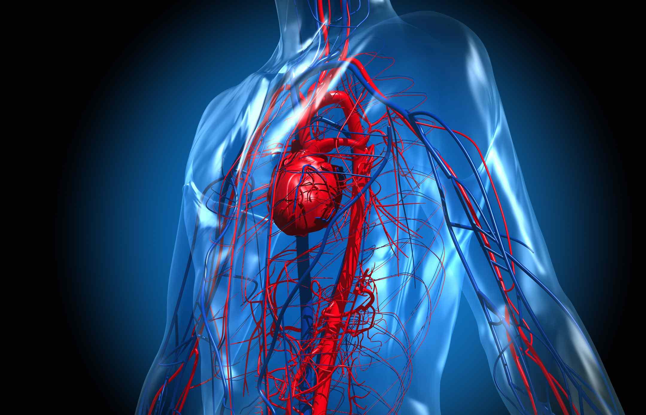 محل دقیق قلب انسان کجاست؟
