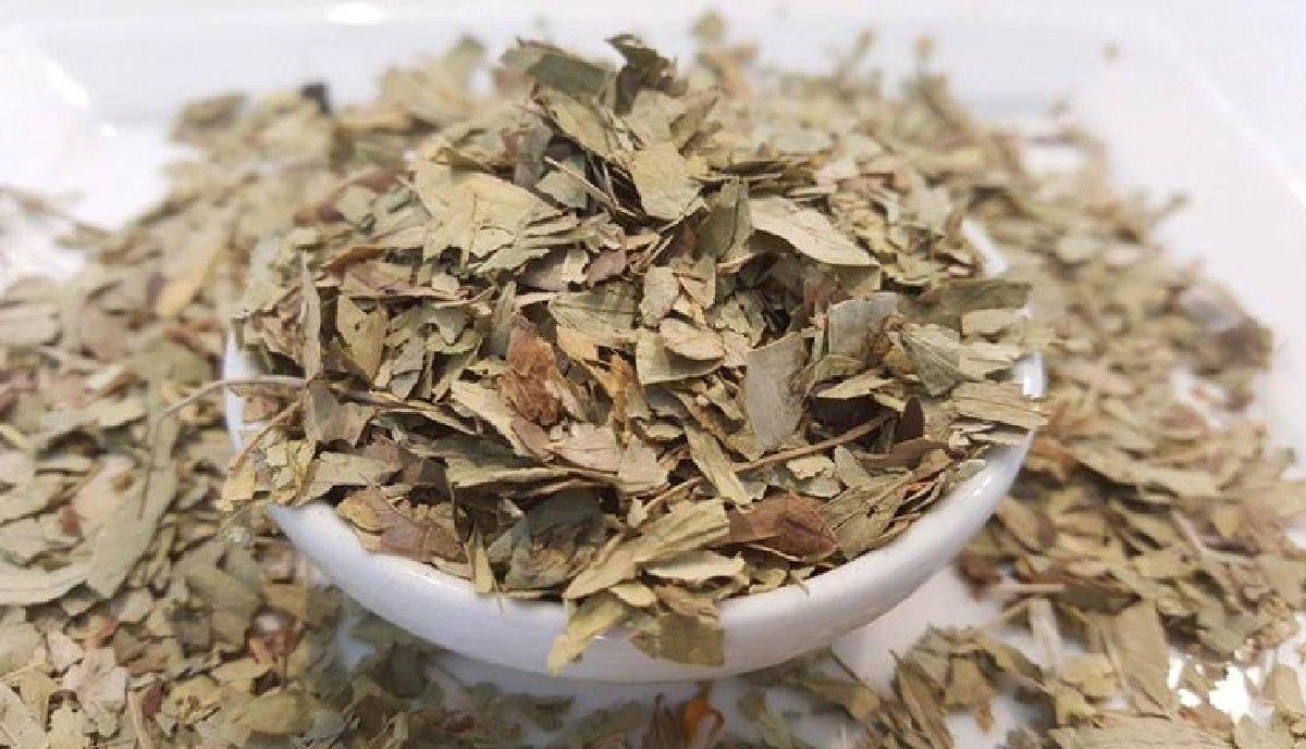 ۸ خاصیت درمانی گیاه سنا و طرز تهیه چای سنا