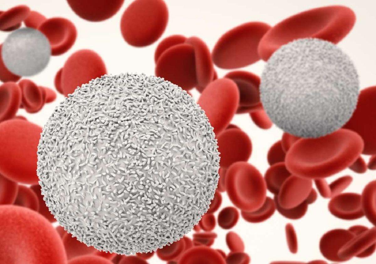 همه چیز راجع به اختلالات گلبول های سفید خون