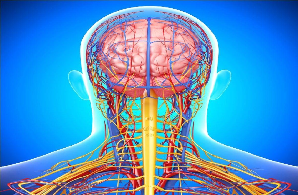 هرآنچه که باید راجع به  سیستم عصبی بدن بدانیم