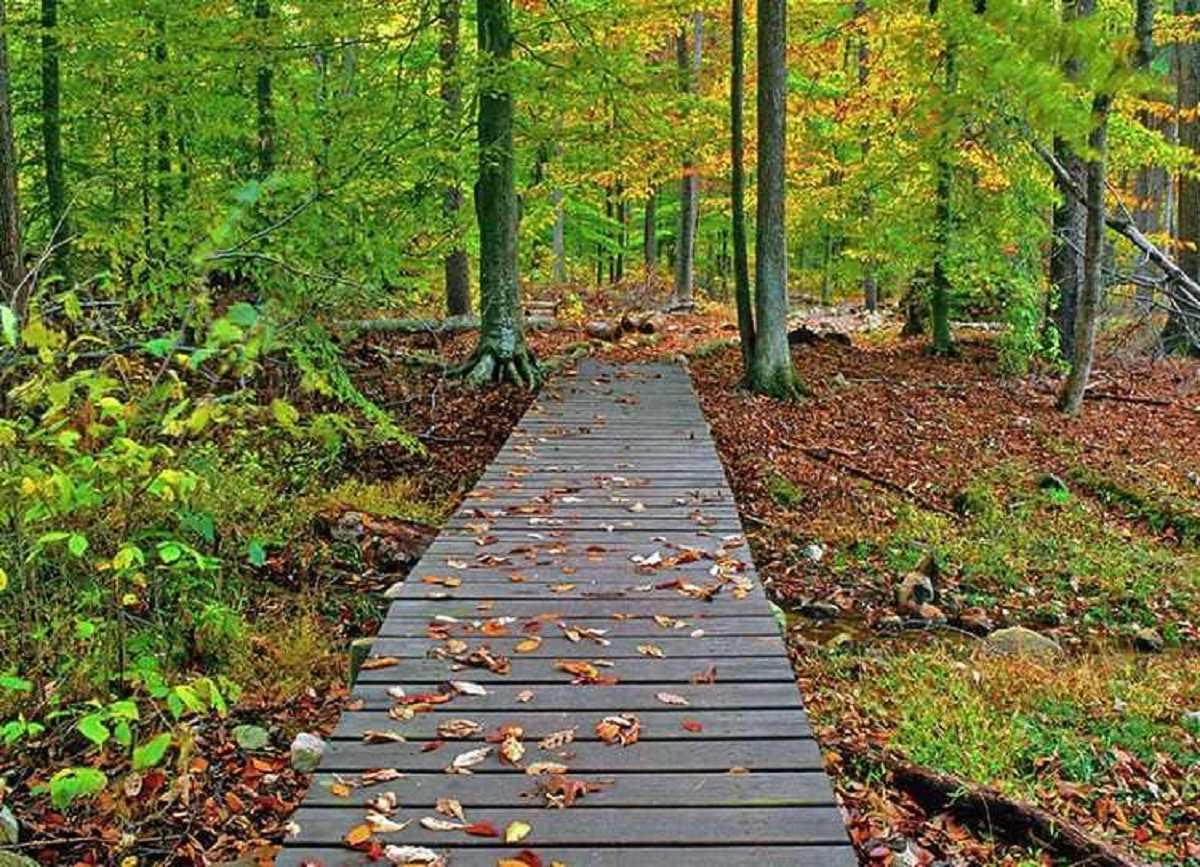 زیبایی های منحصر به فرد پارک جنگلی گیسوم