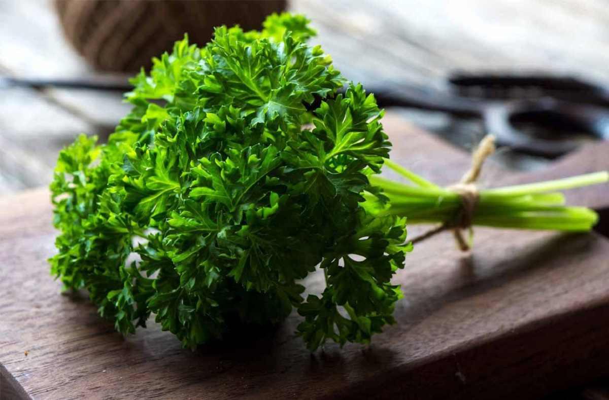 خواص و مزایای سبزی جعفری برای سلامتی
