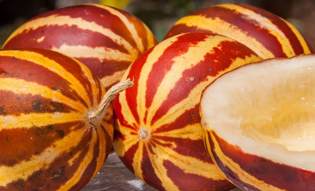 فواید میوه دستنبو برای سلامتی