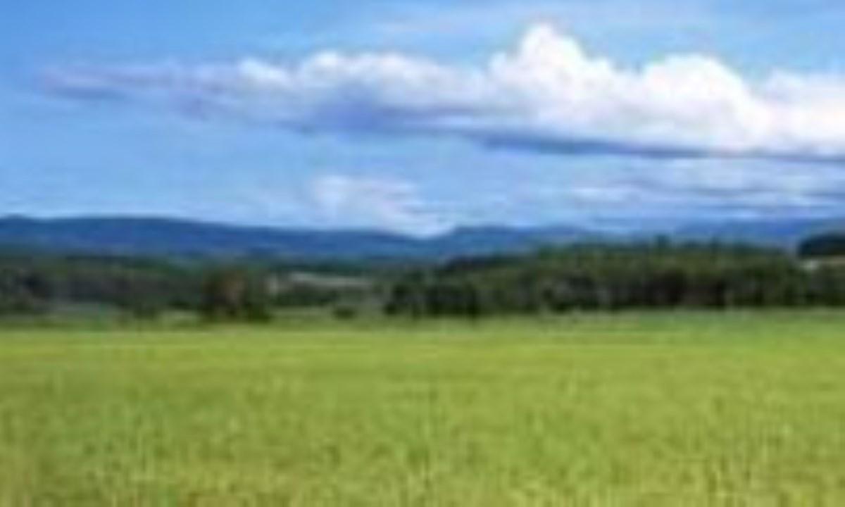 پاگو، همياري کشاورزي