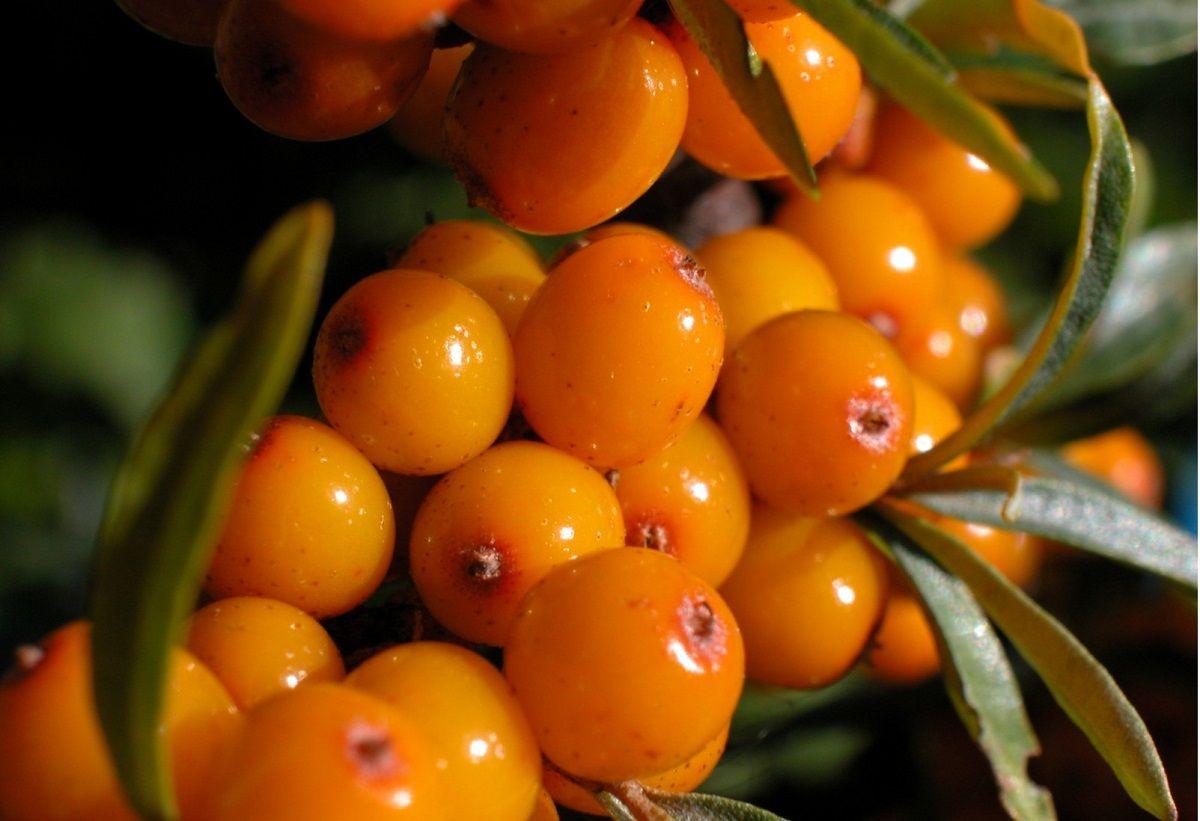 خواص میوه خولان برای سلامتی