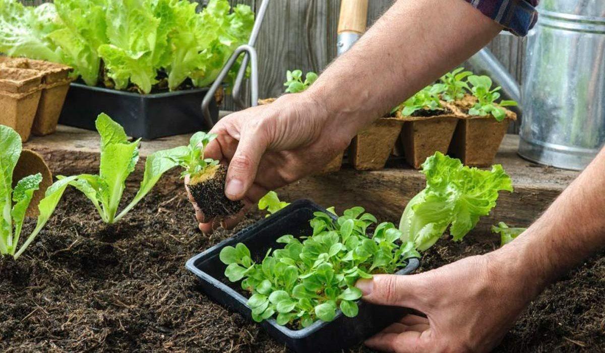 آشنایی با سبزیجات مفیدی که شاید تابحال نخورده باشیم