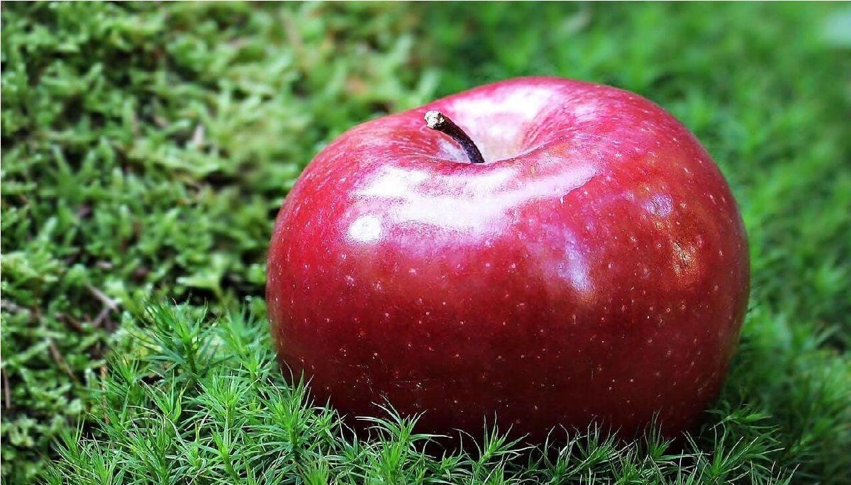 سیب و یک دنیا خاصیت