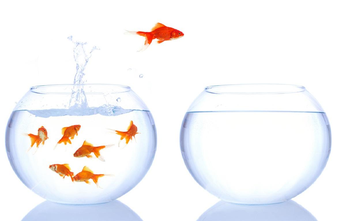 راجع به ترس از موفقیت یا عقده یونس چه میدانید؟