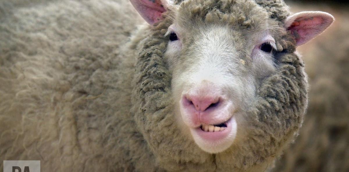 درسهایی از گوسفندان: لزوم تداوم شبیه سازی و استفاده از مغز آنها در تحقیقات بیماری