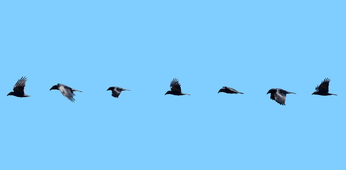 هواپیماهای بدون سرنشین بال زن