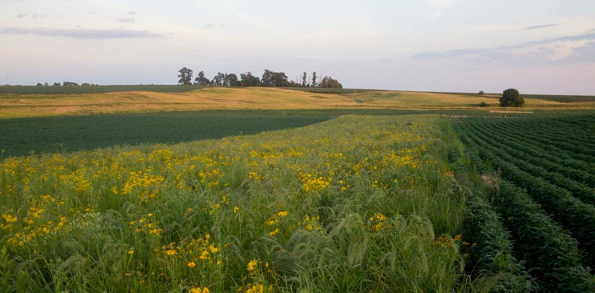 کشاورزی دوستدار اقلیم