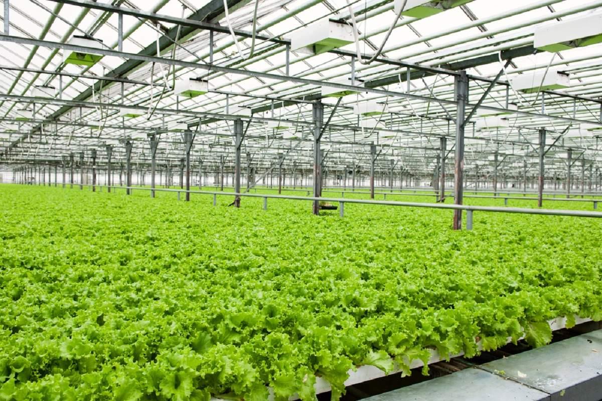 مزایا و معایب کشاورزی گلخانه ای