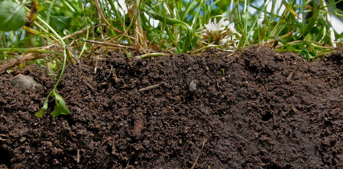 خاک سالم کلید اصلی تغذیه ی جهان است