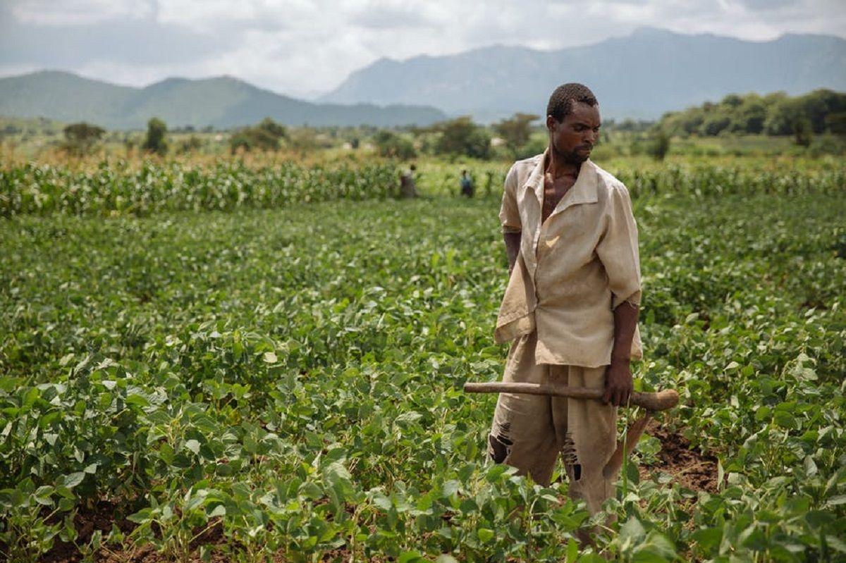 کشاورزی پایدار و تجدید شدنی با رویکرد به مزارع کوچک