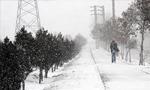 برف و کولاک در آذربایجان شرقی تلفاتی به بار آورد(1354ش)