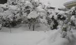 برف و باران شهرهای آذربایجان و مازندران و گیلان را فلج کرد و ارتباط صدها دهکده قطع شد و در فومن و لاهیجان یک متر برف بارید(1349ش)